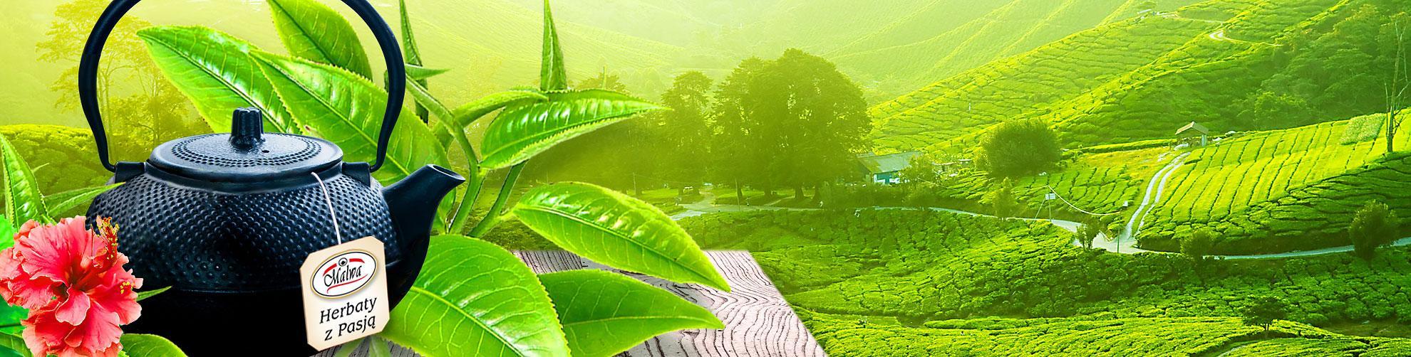 Malwa Tea - Herbaty Zielone