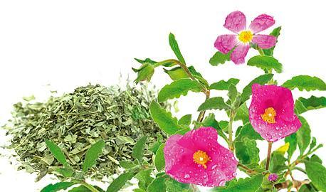 Dried Herbs - Cistus