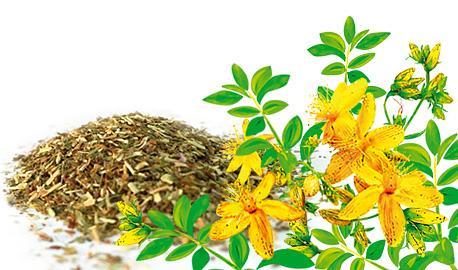 Herbal Teas Express - St. John's Wort