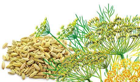 Herbal Teas Express - Fennel