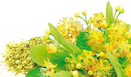 Herbaty Ziołowe Ekspresowe - Kwiat Lipy
