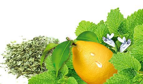 Exclusive Sunny Garden Teas - Lemon Balm with Lemon