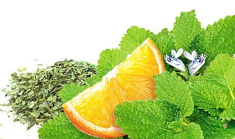 Herbal Teas Express - Lemon Balm with Orange