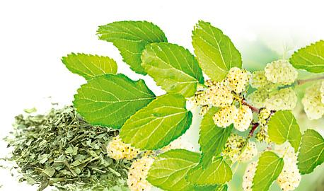 Dried Herbs - White Mulberry