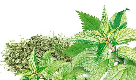 Dried Herbs - Nettle