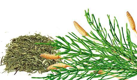 Herbal Teas Express - Horsetail