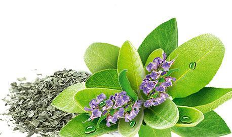 Herbal Teas Express - Sage